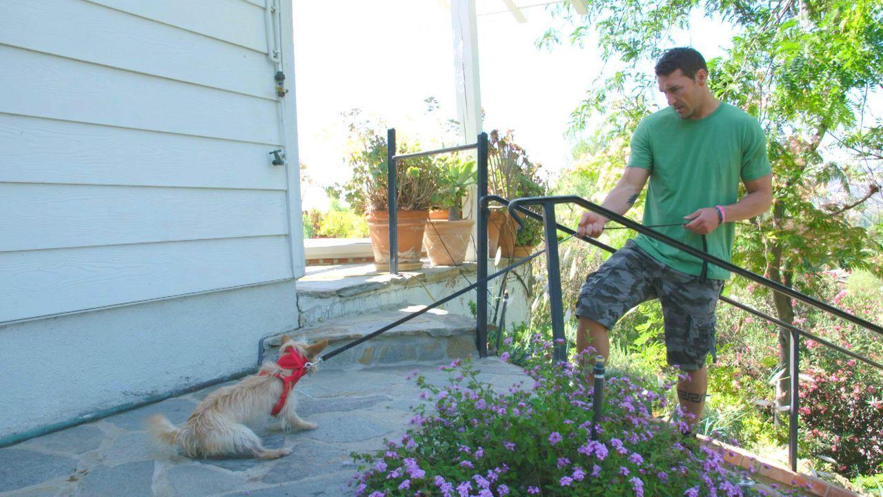 (3. Staffel) - Ungeliebt, nicht vermittelbar, aggressiv, verhaltensgestört - Hundetrainer Brandon McMillan gibt genau solchen Hunden ein sicheres Zu... - Bildquelle: 2015 Lucky Dog. All Rights Reserved.