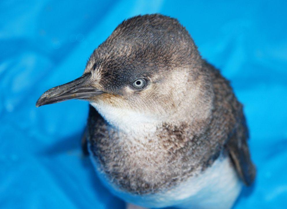 Pinguine in der Not und Dr. Brown soll helfen ... - Bildquelle: WTFN Entertainment