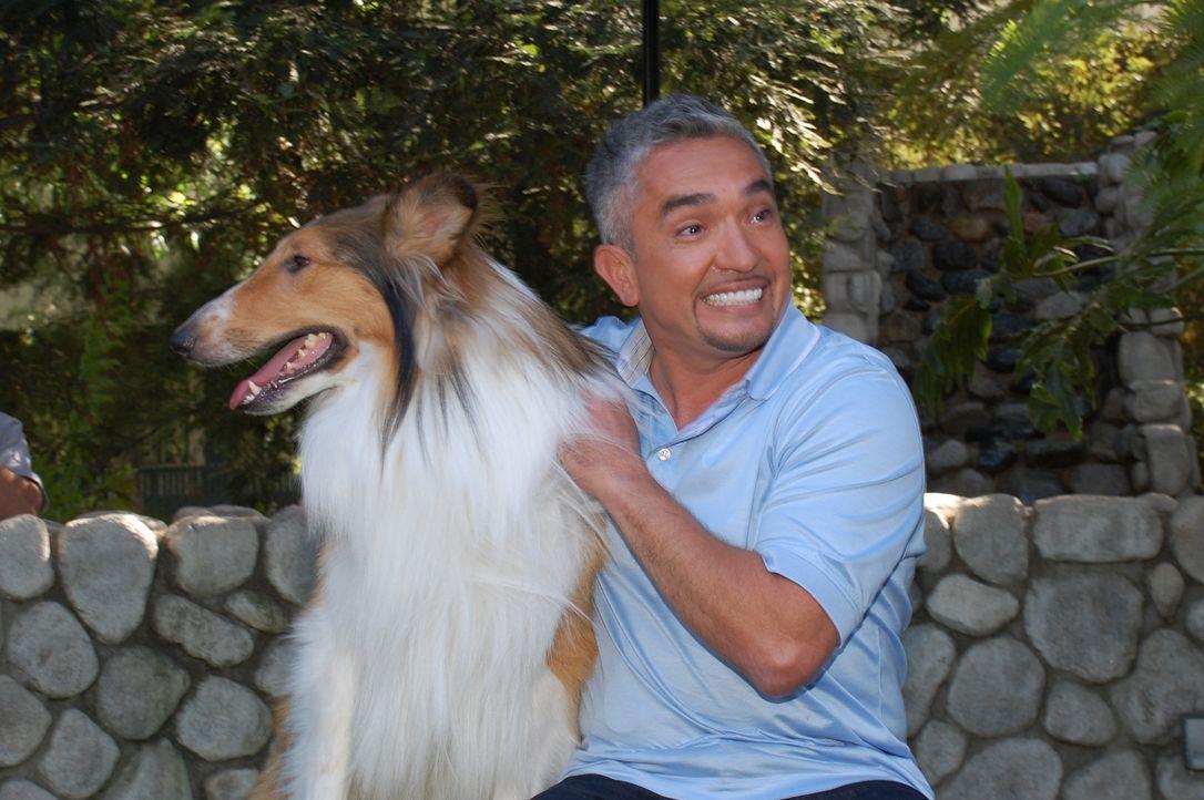 Cesar Millan stattet ehemaligen Problemfällen einen Besuch ab, um zu sehen ob sich die Beziehungen der Hunde und ihrer Besitzer auch auf lange Sicht... - Bildquelle: Rive Gauche Intern. Television