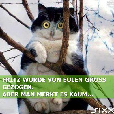 Visual Statements: Eulen-Katze - Bildquelle: sixx