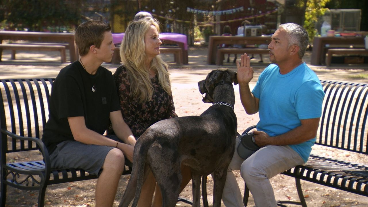 Leslie (M.) und Si (l.) lieben ihren geretteten Hund Junior, doch ohne Cesars (r.) Hilfe können sie den aggressiven Hund nicht länger behalten ... - Bildquelle: National Geographic Channels/LWT Enterprises