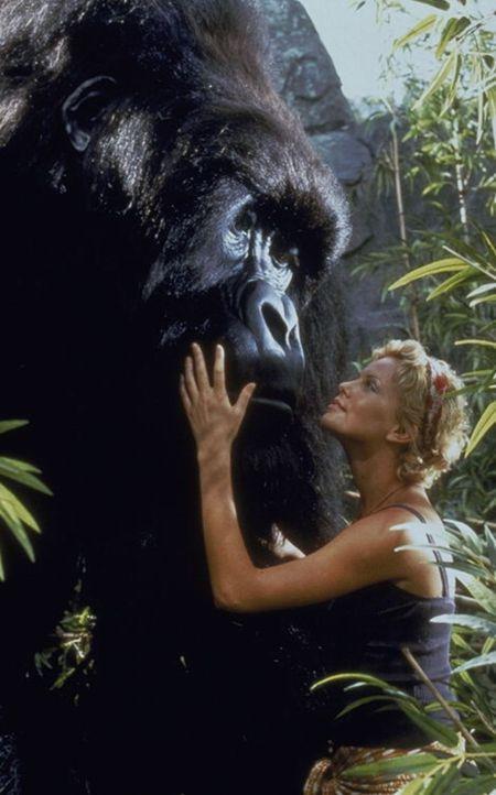Wenn in den Pangani-Bergen Zentralafrikas der Urwald wackelt und die Erde bebt, kann Joe - ein über vier Meter großer Riesengorilla - und seine li...