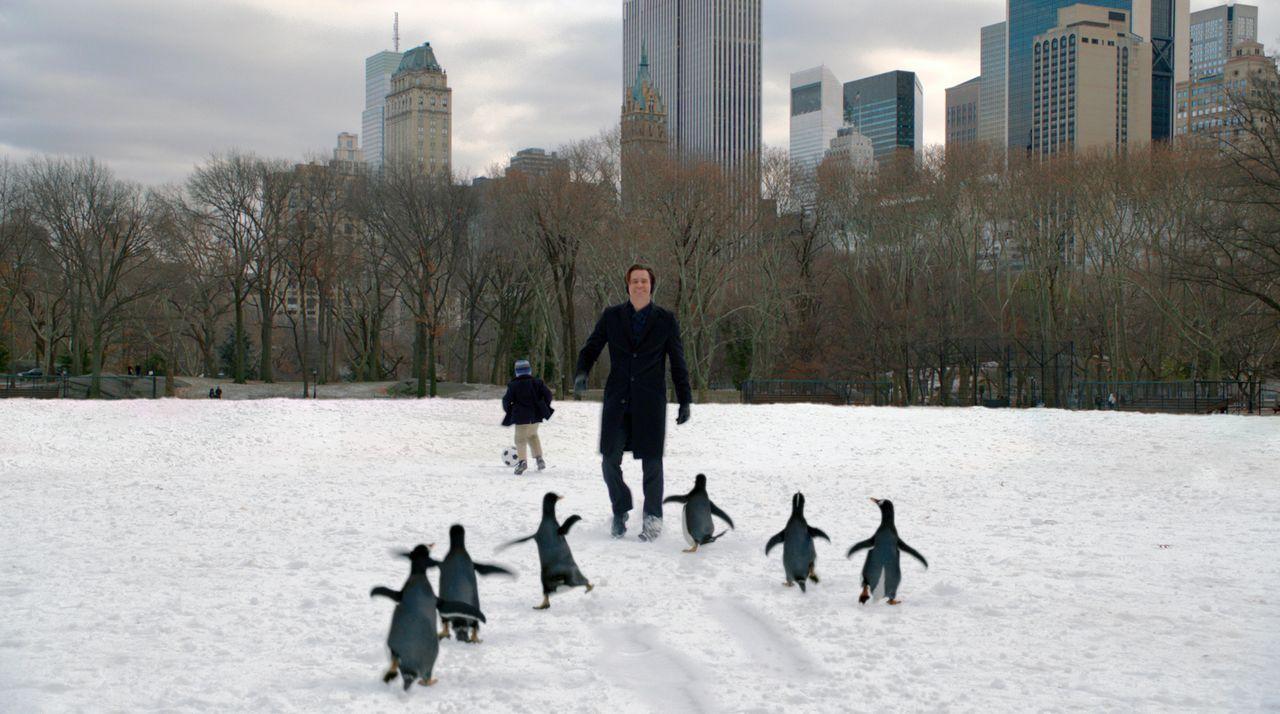 Der Geschäftsmann Tom Popper (Jim Carrey, r.) hat sechs niedliche Pinguine, die sein Leben ordentlich auf den Kopf stellen. Obwohl die kleinen Tierc... - Bildquelle: 2011 Twentieth Century Fox Film Corporation. All rights reserved.