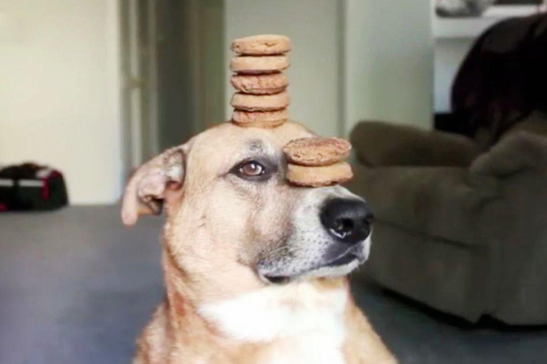 """""""Jetzt wird's tierisch"""" bringt die lustigsten Hundevideos auf den Bildschirm, die die Besitzer von ihren Lieblingen aufgenommen haben ... - Bildquelle: sixx"""