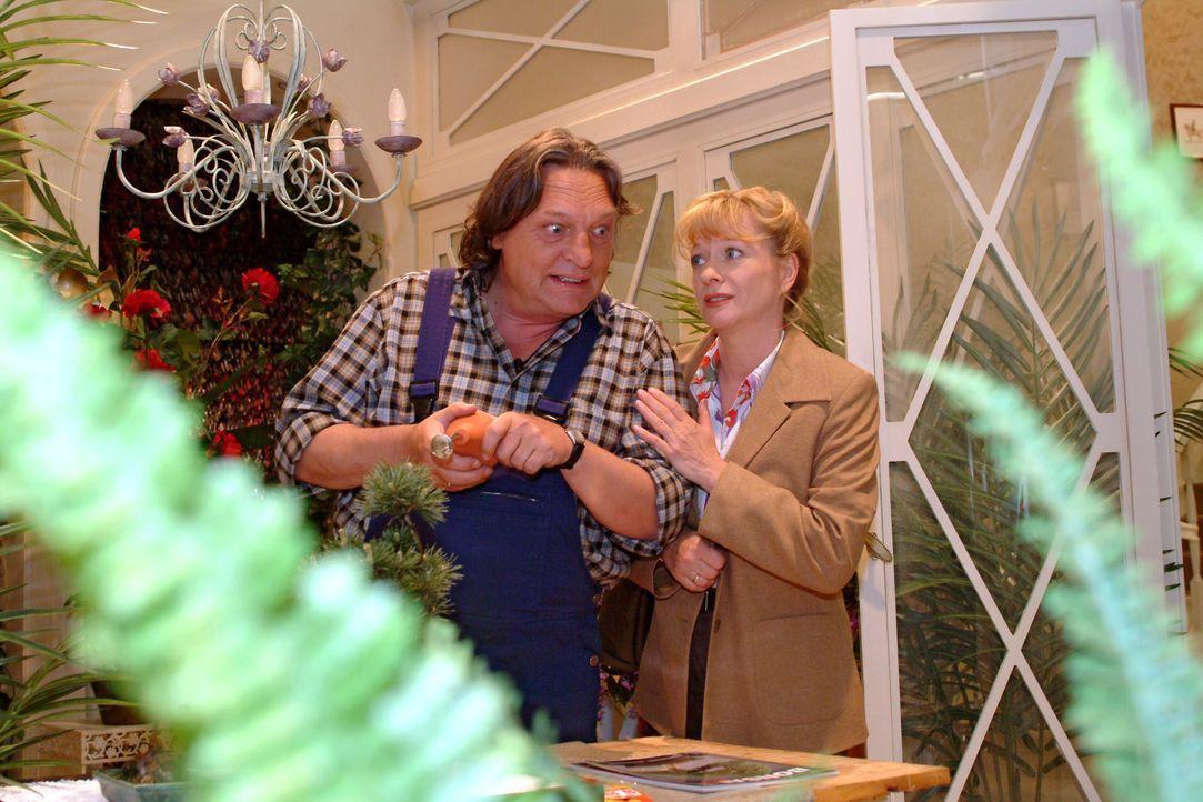 Helga (Ulrike Mai, r.) sucht Bernd (Volker Herold, l.) bei der Arbeit auf und schildert ihm die wahren Motive für Lisas erfundene Verlobung. - Bildquelle: Monika Schürle SAT.1 / Monika Schürle
