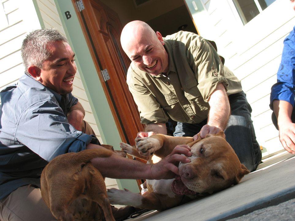 Cesar Millan (l.) ist nicht nur ein Hundeflüsterer, sondern auch ein Experte in Sachen Hundeangst: Sein heutiger Patient ist der Familienvater Ernes... - Bildquelle: Rive Gauche Intern. Television