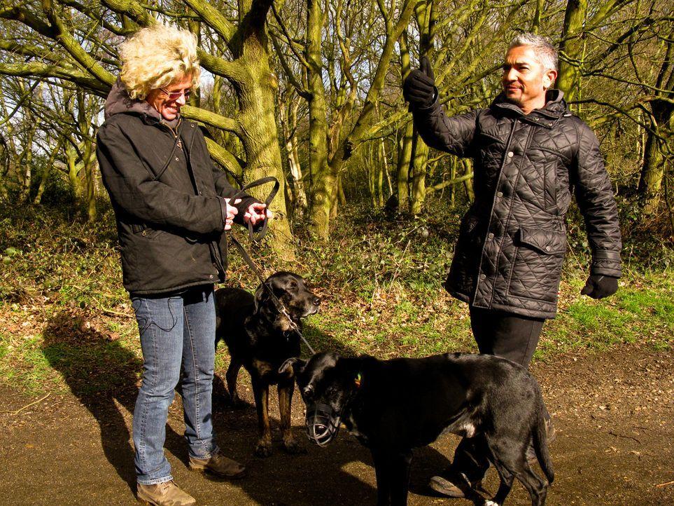 Cesar ist auf großer Hundeflüsterer-Mission quer durch Großbritannien: Sally hat große Probleme mit ihrem Hund Herbie. Ihre letzte Hoffnung ist... - Bildquelle: 2014 Rive Gauche Television. All rights reserved.