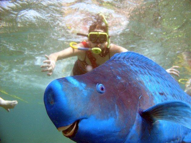 Ein Fisch ist blau - Bildquelle: proteon/reddit.com/buzzfeed.com