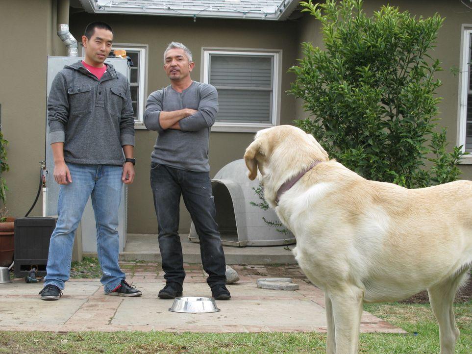 Als Cesar (r.) das Zuhause der Familie Lai in Los Angeles betritt, ahnt er nicht, dass dieser Auftrag der härteste und langwierigste seiner gesamten... - Bildquelle: Ryan Cass MPH - Emery/Sumner Joint Venture