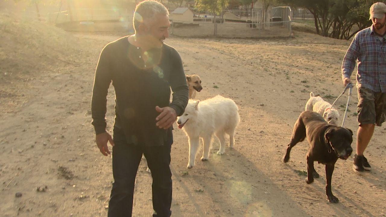 Cesar (l.) will Janette und John (r.) helfen, ein wenig Ruhe in ihr Haus zu bringen, denn momentan sorgen drei Hunde für einigen Zündstoff ... - Bildquelle: NGC/ ITV Studios Ltd