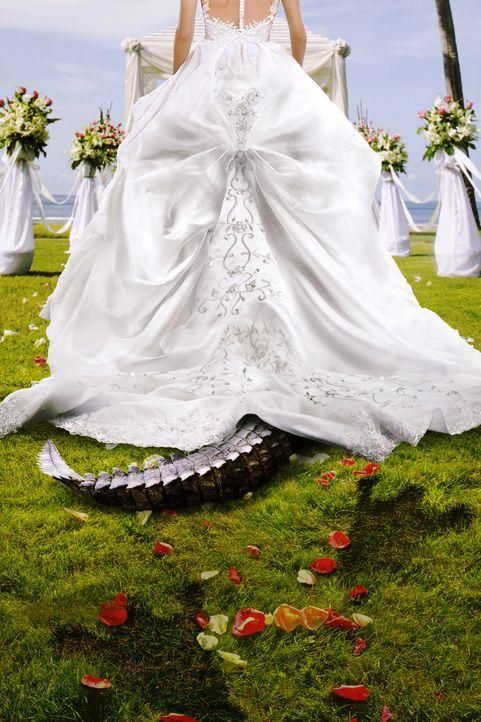 (11. Staffel) Bridezillas - Bräute flippen aus! - Artwork - Bildquelle: licensed by DCD Rights Ltd.