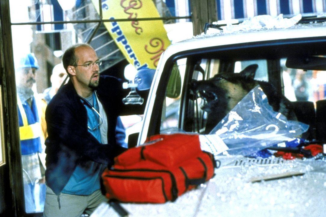 Dr. Greene (Anthony Edwards) hat ein ungewöhnliches Problem. Ein aggressiver Hund hindert ihn daran, zu dem Verletzten im Auto zu gelangen. - Bildquelle: TM+  2000 WARNER BROS.