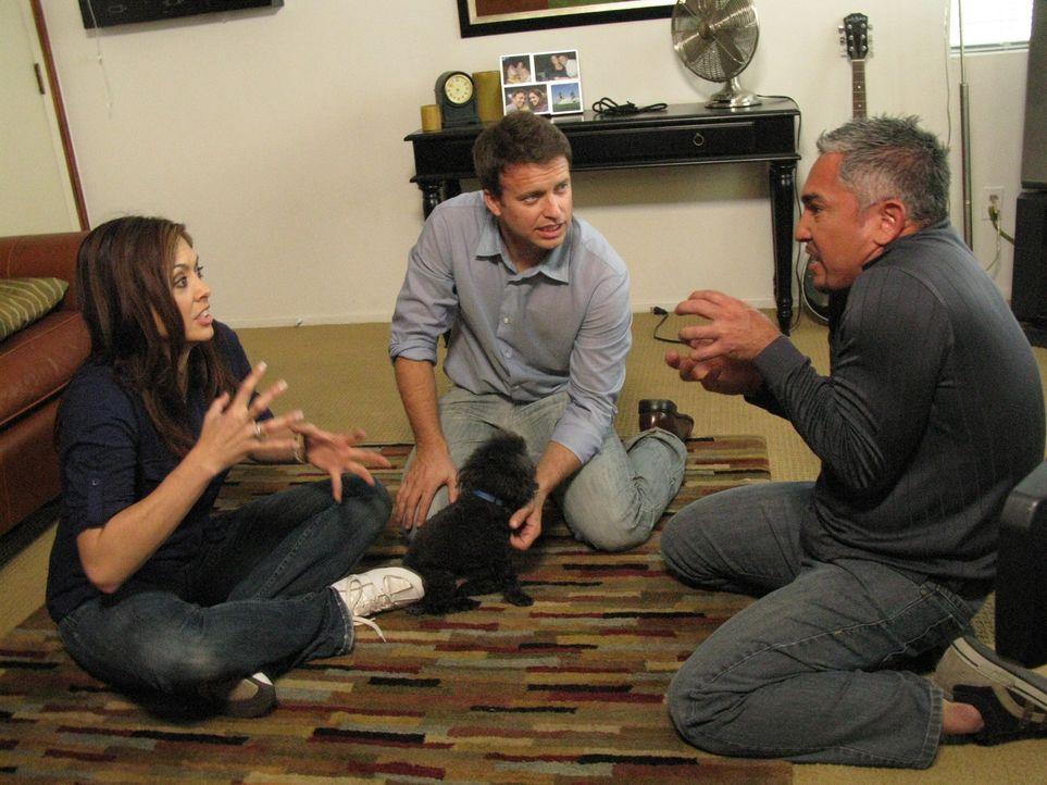Tanéa (l.) liebt ihren Teacup Pudel Tucker, doch der Hund bereitet ihr und ihrem Freund Bret (M.) große Probleme. Kann Cesar Millan (r.) helfen?