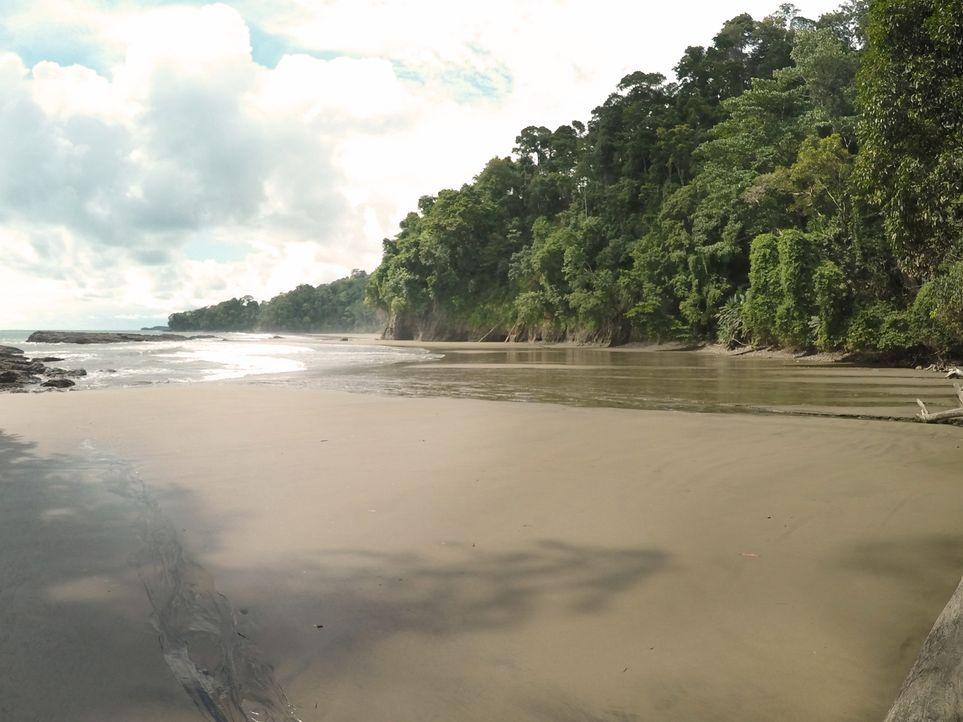 Im Nationalpark Marino Ballena in Costa Rica befindet sich der wunderschöne Strand Playa Arcos, der für seine Walbeobachtungen bekannt ist ... - Bildquelle: 2016,The Travel Channel, L.L.C. All Rights Reserved.