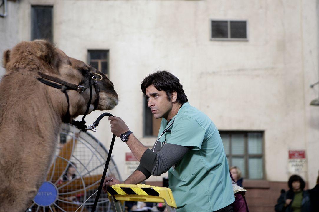 Die Chirurgen proben für Weihnachtsvorstellung, doch dabei wurde Dubenko von einem Kamel ins Bein gebissen. Nun muss eine Speichenprobe genommen we... - Bildquelle: Warner Bros. Television