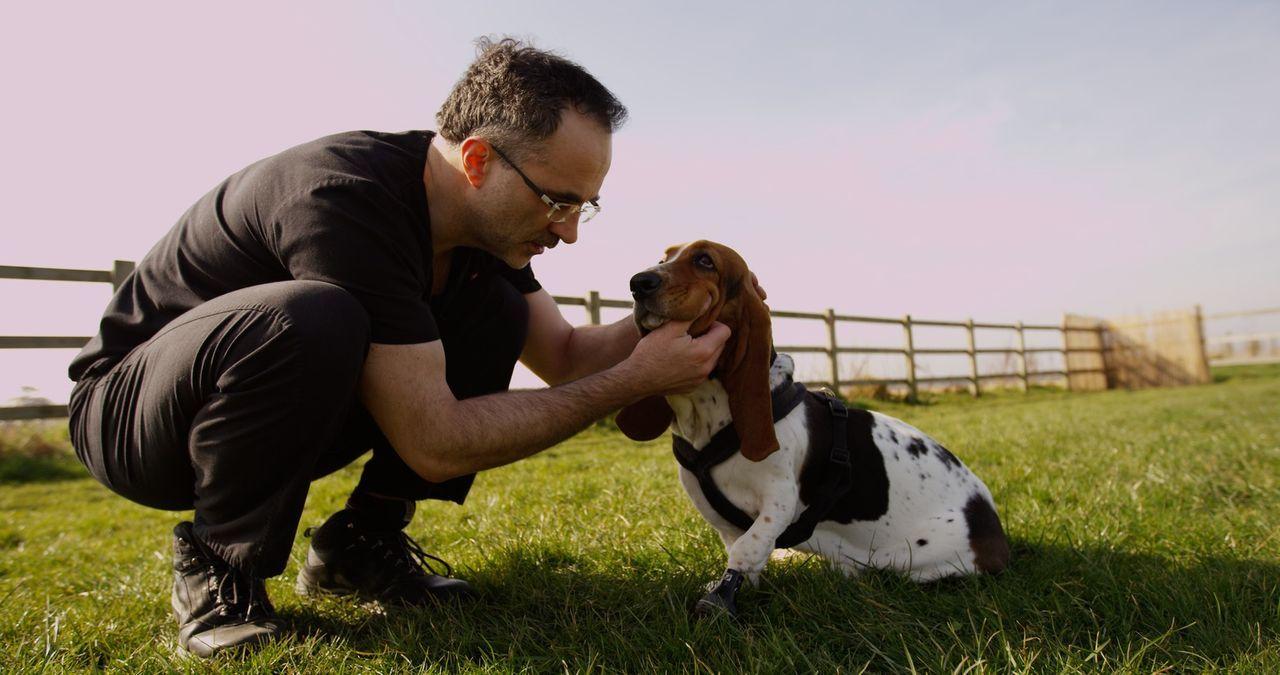 Zusammen mit seinem Team kann Tierarzt Noel Fitzpatrick auch Tieren helfen, die woanders möglichweise dem Tode geweiht gewesen wären ... - Bildquelle: Zodiak Rights 2015
