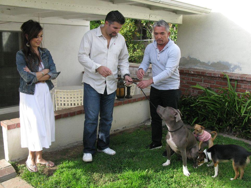 Unter anderem hilft der Hundeflüsterer Cesar Millan (r.) Paul (M.) und Lisa (l.), die Probleme mit ihren beiden Hunden Ginger und Luna haben ...