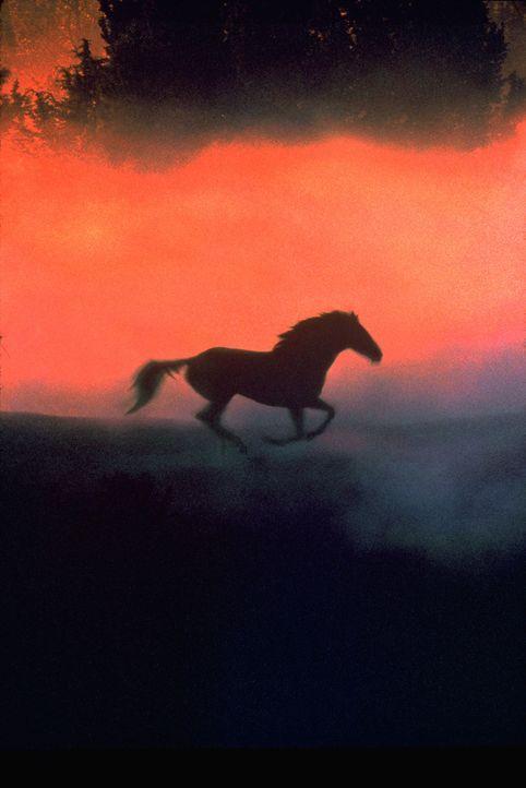 Der Pferdeflüsterer ... - Bildquelle: Touchstone Pictures