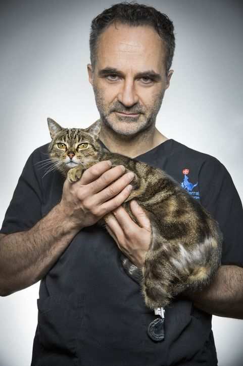Der Retter in der Not: Tierarzt Noel Fitzpatrick hilft Tieren, die woanders möglichweise keine Chance hätten, zu überleben ... - Bildquelle: Zodiak Rights 2015