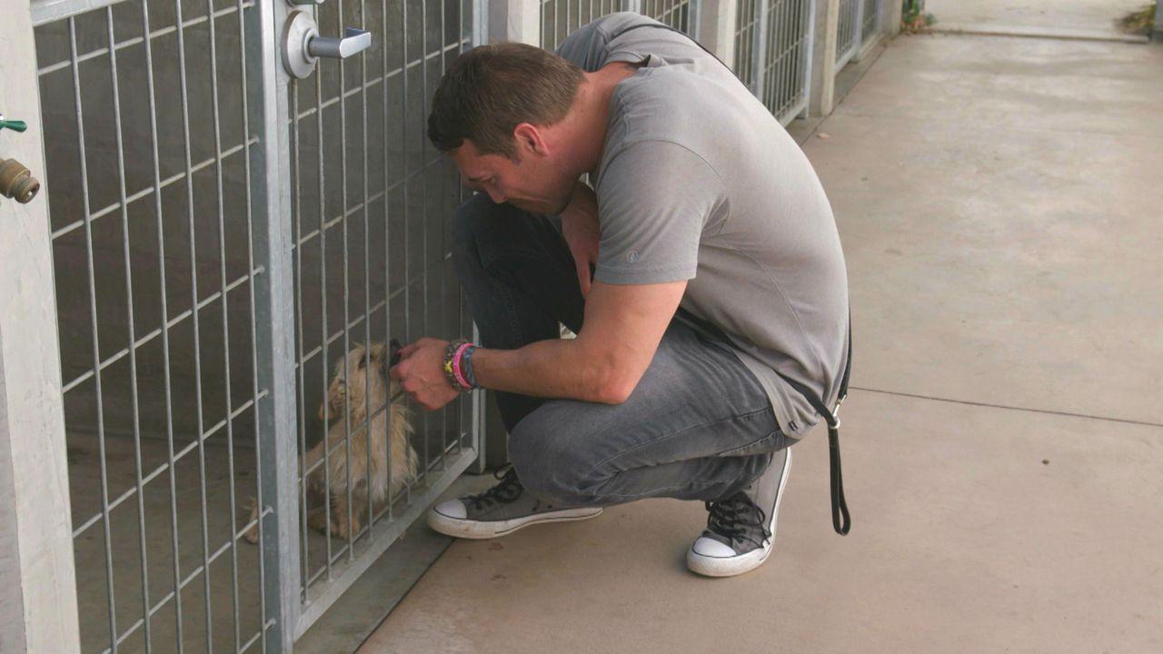 (3. Staffel) - Der Hundetrainer Brandon McMillan hat es sich zur Aufgabe gemacht, schwer vermittelbare Hunde aus Tierheimen zu retten, sie zu traini... - Bildquelle: 2015 Lucky Dog. All Rights Reserved.