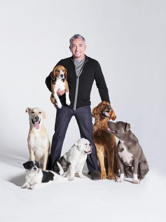 Cesar Millan mit sechs Hunden