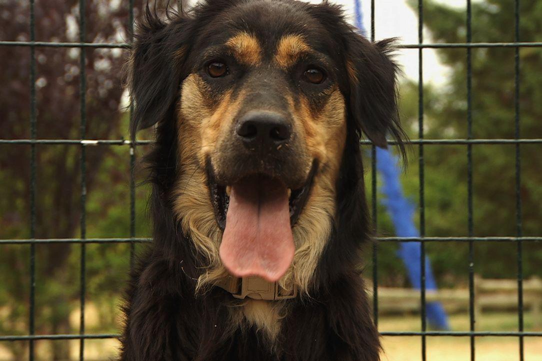 Sophia hatte die schlechtesten Erfahrungen, die Hunde mit Menschen erleben können. Nun ist sie so voller Angst, dass es praktisch unmöglich ist, sie... - Bildquelle: Belén Ruiz Lanzas 360 Powwow, LLC / Belén Ruiz Lanzas