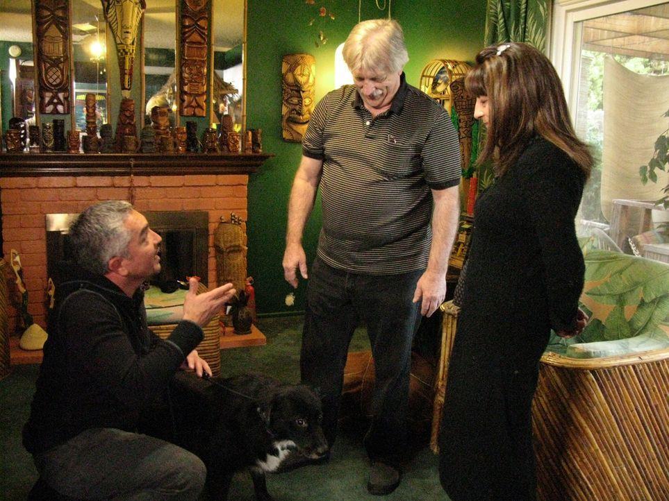 Rhonda (r.) und Rennie (M.) haben ihren Hund Dong Dong aus Taiwan mitgebracht. Der überaus ängstliche Border-Collie-Mischling macht seinen Besitze...