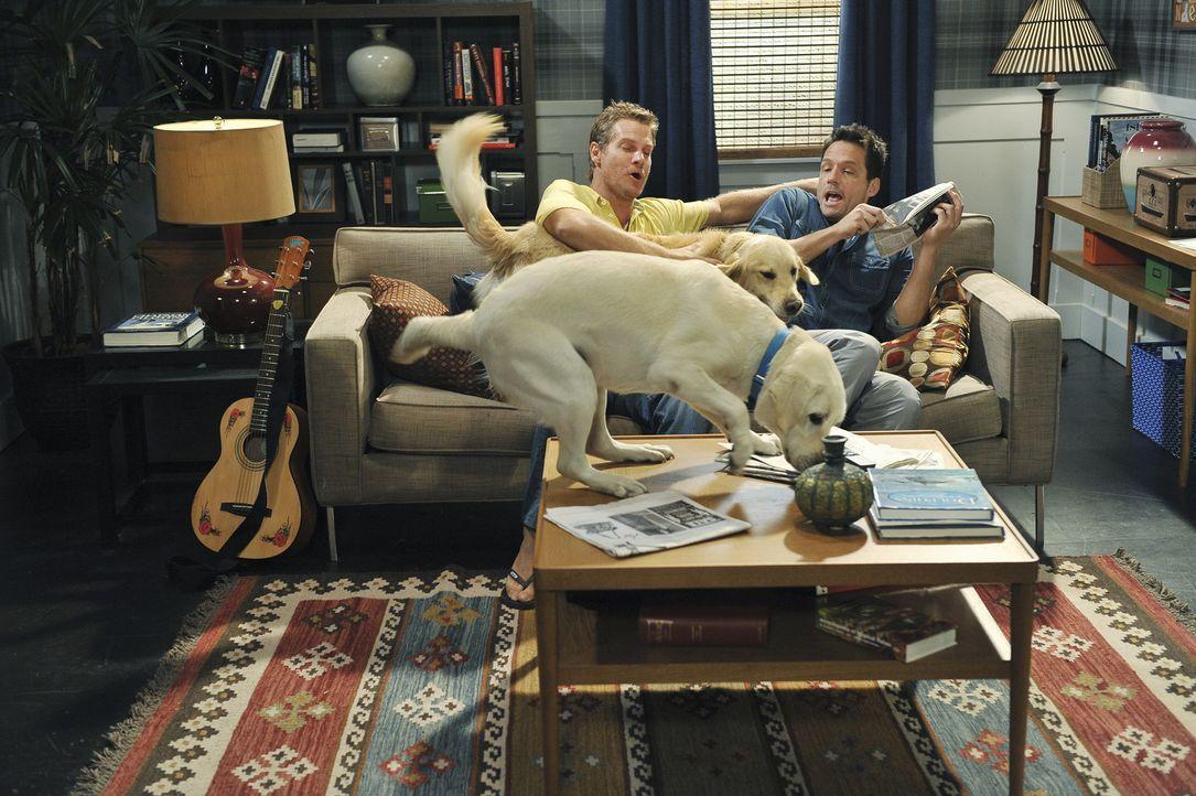 Da hat Bobby (Brian Van Holt, l.) wohl mal wieder die Tür offen gelassen und so sind irgendwelche Hunde in die Wohnung geraten. Was tut sich Grayso... - Bildquelle: 2009 ABC INC.