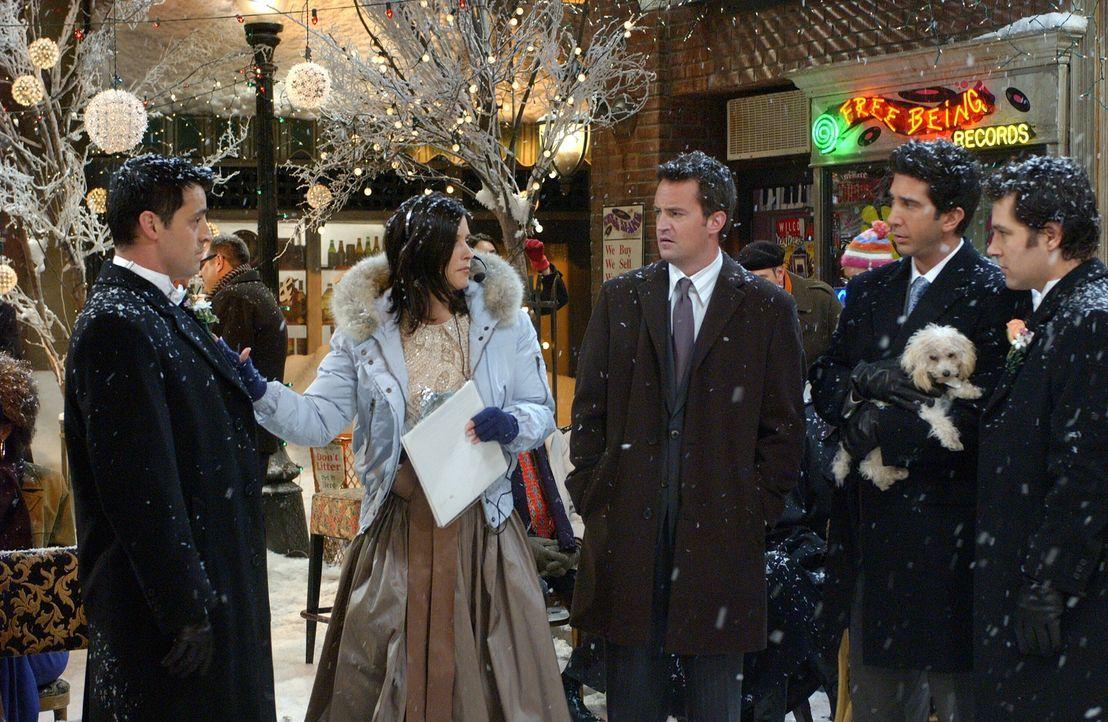 Das Chaos scheint auszubrechen, denn Monica (Courteney Cox, 2.v.l.) übertreibt ihre Anstrengungen als Hochzeitsplanerin und geht Joey (Matt LeBlanc,... - Bildquelle: 2003 Warner Brothers International Television