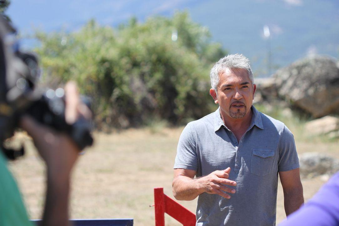 Seine Entscheidung kann das Leben einiger Menschen und vor allem das der Hündin Rosie maßgeblich beeinflussen: Cesar Millan ... - Bildquelle: Belén Ruiz Lanzas 360 Powwow, LLC / Belén Ruiz Lanzas