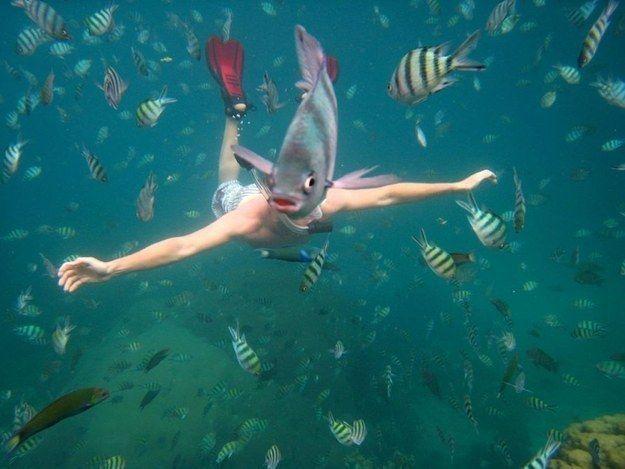Fischjungmann - Bildquelle: reddit.com/buzzfeed.com