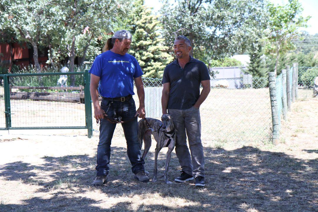 Suchen für den Greyhound Amigo ein neues Zuhause: Peter Koekebakker (l.) und Cesar (r.) ... - Bildquelle: Belén Ruiz Lanzas 360 Powwow, LLC / Belén Ruiz Lanzas