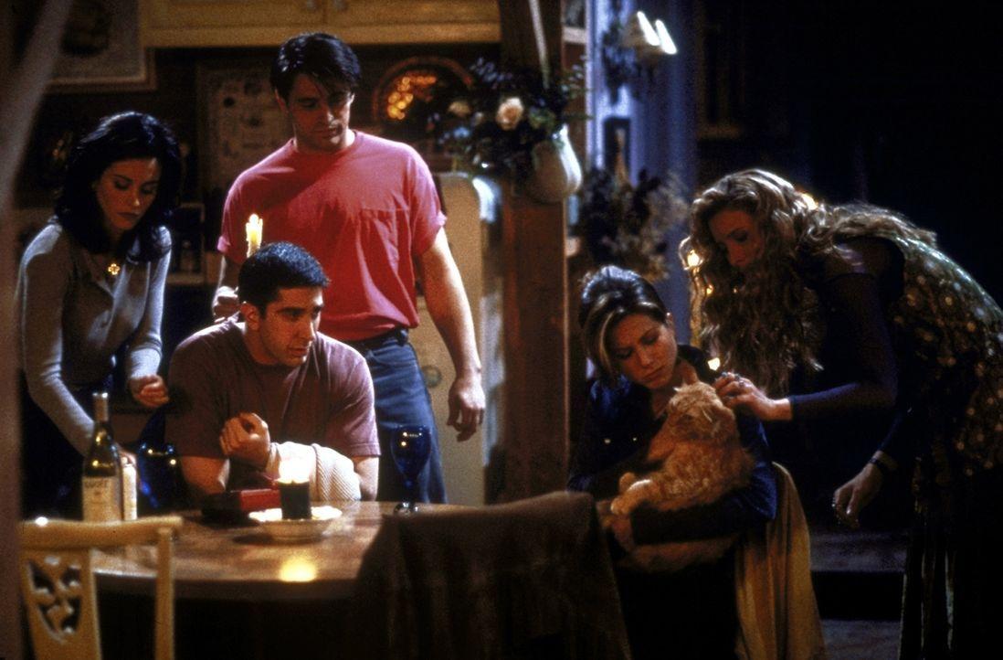 Monica (Courteney Cox, l.), Ross (David Schwimmer, 2.v.l.), Joey (Matt LeBlanc, 3.v.l.), Rachel (Jennifer Aniston, 2.v.r.) und Phoebe (Lisa Kudrow,... - Bildquelle: TM+  2000 WARNER BROS.