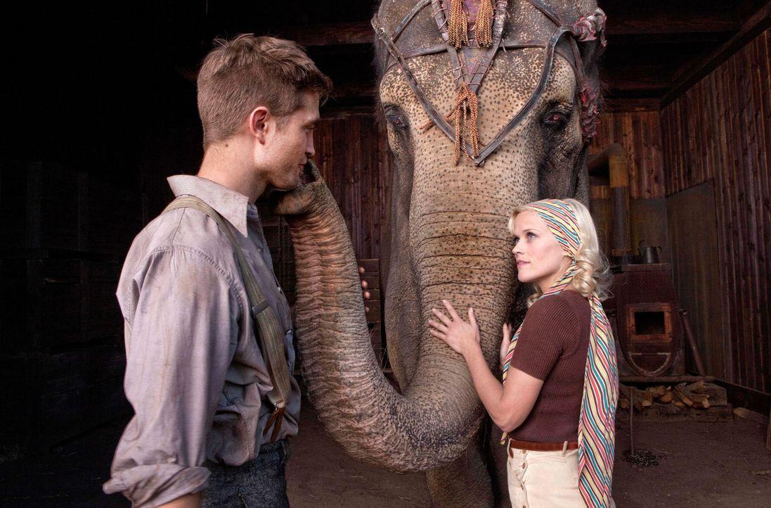 Marlena (Reese Witherspoon, r.) und Jacob (Robert Pattinson, l.) verlieben sich ineinander, doch ihre Romanze ist ein riskanter Drahtseilakt. Denn M... - Bildquelle: David James 2011 Twentieth Century Fox Film Corporation. All rights reserved. / David James