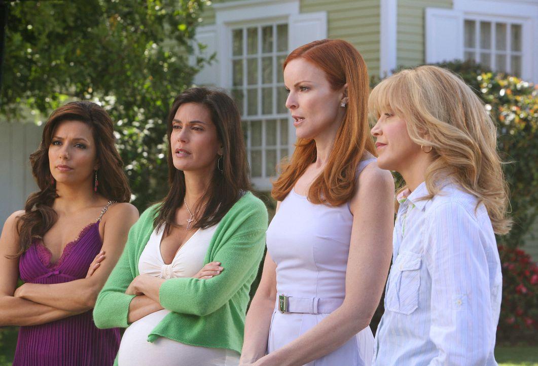Verbünden sich gegen Edie: Lynette (Felicity Huffman, r.), Susan (Teri Hatcher, 2.v.l.), Gabrielle (Eva Longoria, l.) und Bree (Marcia Cross, 2.v.r.... - Bildquelle: ABC Studios