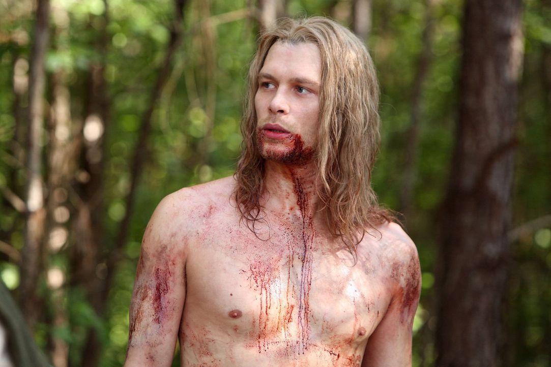 Schon vor Jahrhunderten erkannte Klaus (Joseph Morgan), dass der Mann, den er einst für seinen Vater hielt, eben genau das nicht ist und der Kampf s... - Bildquelle: Warner Bros. Television