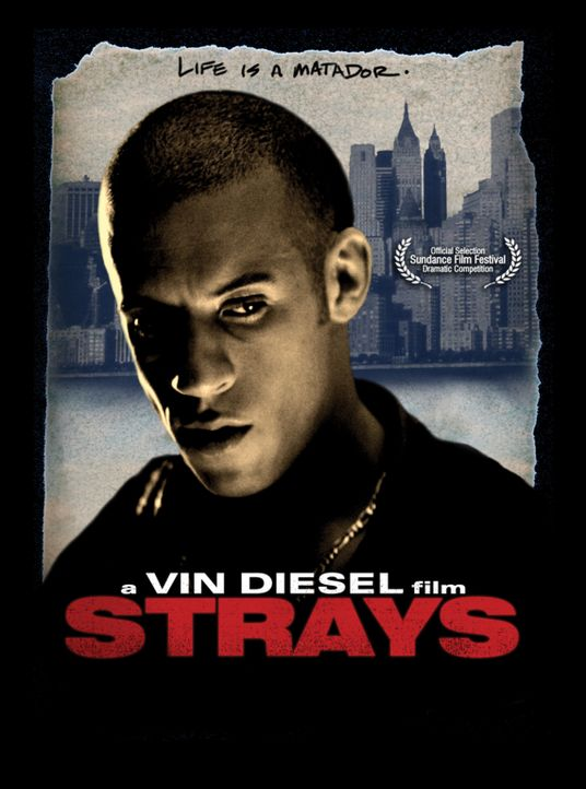 STRAYS - LEBE DEIN LEBEN - Plakatmotiv - Bildquelle: Licensed by First Look Media  Inc.
