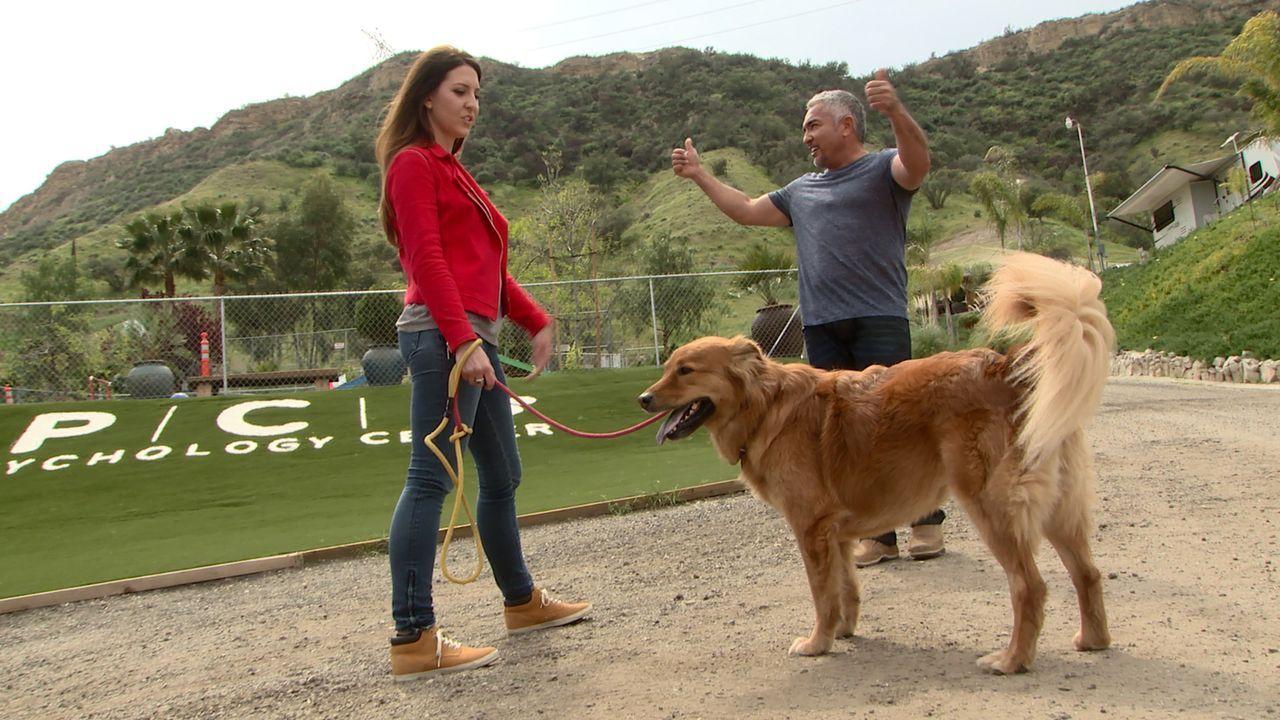 Mit gezieltem Training versucht Cesar (r.), Leon und seinem Frauchen Caitlin (l.) zu helfen, damit diese ihr letztes Versprechen an ihre verstorben... - Bildquelle: NGC/ ITV Studios Ltd