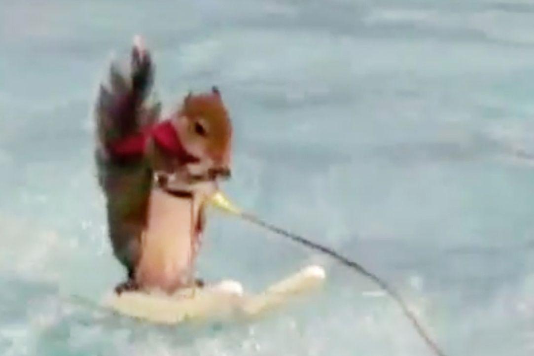 """""""Jetzt wird's tierisch"""" bringt die lustigsten Tiervideos auf den Bildschirm ... - Bildquelle: sixx"""