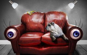 hund-couch