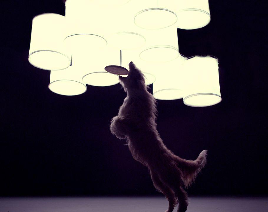 Vor etwa 16 000 Jahren begann die wunderbare Freundschaft zwischen Mensch und Hund. Inzwischen werden die außergewöhnlichen Fähigkeiten der Vierbein... - Bildquelle: Simon Reay Oxford Scientific Films Ltd 2012