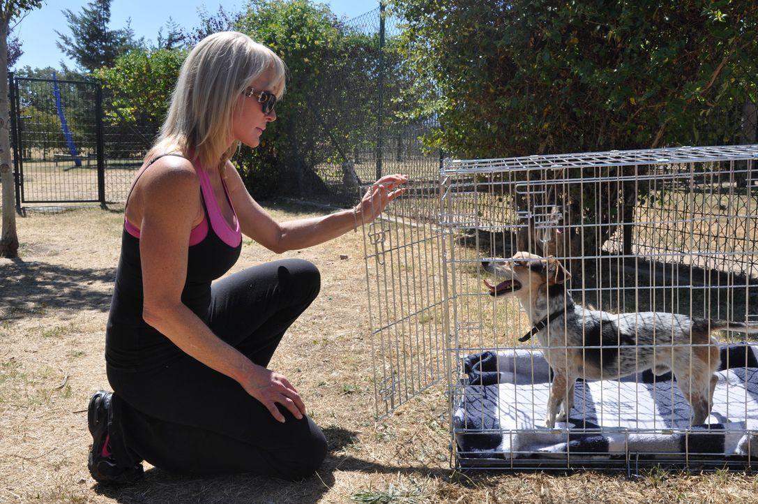 Cheri, die Hundetrainerin, will mit Mambo ein Hindernisparcour absolvieren, um ihm endlich Grenzen und Regeln aufzuzeigen ... - Bildquelle: Belén Ruiz Lanzas 360 Powwow, LLC / Belén Ruiz Lanzas