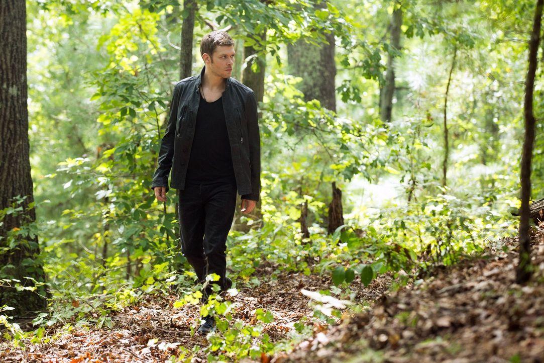 Auf der Suche nach einem Heilmittel für Elijah, muss Klaus (Joseph Morgan) mit einem unerwarteten Partner zusammenarbeiten ... - Bildquelle: Warner Bros. Television