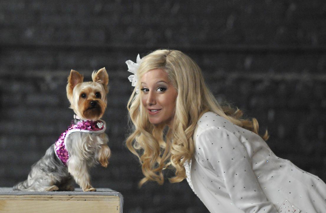 """Erst in New York wird Sharpay (Ashley Tisdale) klar, dass der Regisseur nicht sie, sondern ihren Hund verpflichten möchte. Dumm nur, dass """"Boy"""" eine... - Bildquelle: 2010 Disney Enterprises, Inc. All rights reserved."""