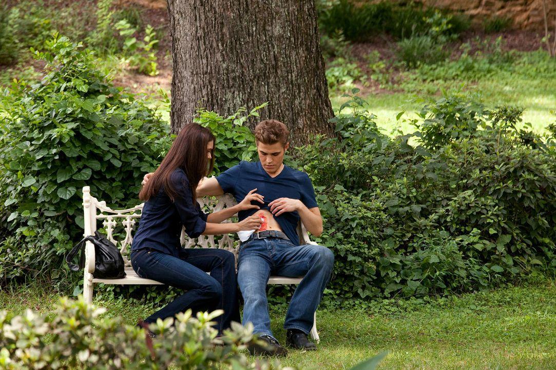 Verwundet von seiner intriganten Vampir-Exfreundin Katherine, genießt Stefan (Paul Wesley, r.) nun die liebevolle Fürsorge seiner Freundin Elana (Ni... - Bildquelle: Warner Brothers
