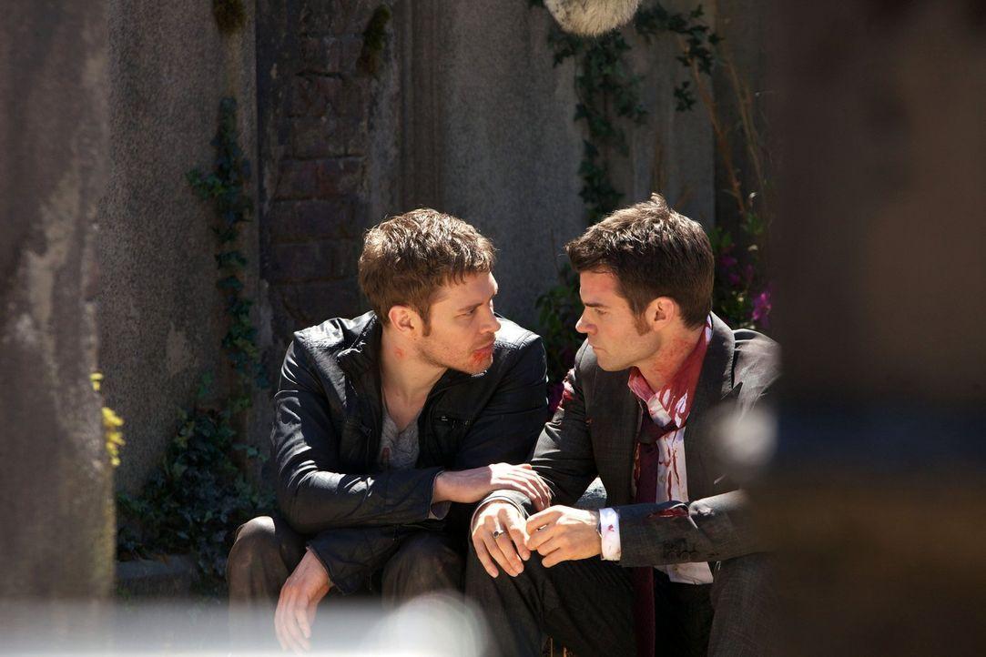 Klaus (Joseph Morgan, l.) und Elijah (Daniel Gillies, r.) wissen, dass ihr Leben nicht sicher genug ist für das ganz besondere Mädchen. Aber auf die... - Bildquelle: Warner Bros. Television