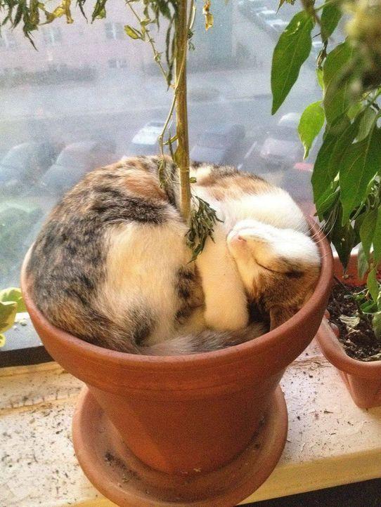 Schlaf-Katze 6