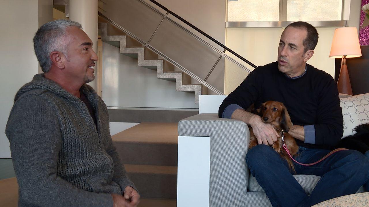 Cesar (l.) bekommt einen Notruf von dem bekannten Comedian Jerry Seinfeld (r.), der gleich zwei Probleme hat. Einer seiner Hunde hat ein Bell-Proble... - Bildquelle: NGC/ ITV Studios Ltd