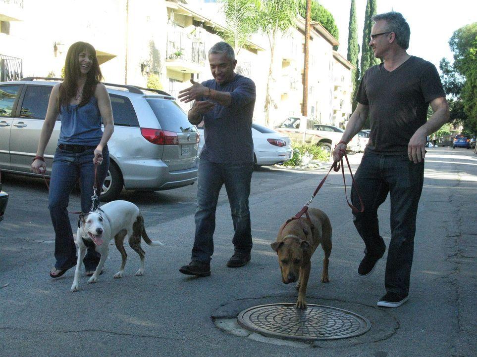 Egal ob Bello, Fiffi oder Wuffi, Cesar Millan hat für jeden Vierbeiner die passende Lösung parat. Der Hundeprofi ist momentan der berühmteste und ge... - Bildquelle: Ryan Cass MPH - Emery/Sumner Joint Venture
