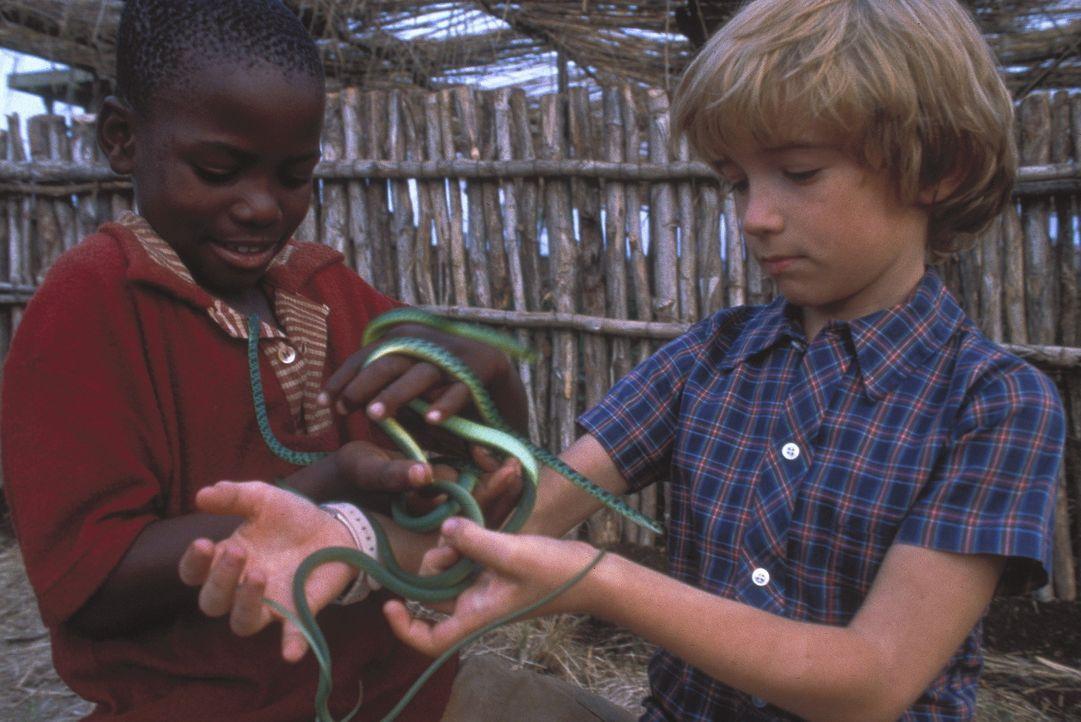 Nach einiger Zeit gewinnt Emanuele (Liam Aiken, r.) in seiner neuen Heimat Freunde und entdeckt ein gefährliches Hobby: das Schlangensammeln. - Bildquelle: Columbia Pictures
